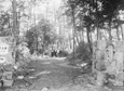 英国詩人ブランデン氏も讃えた森と校門