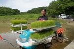 【夢米棚田プロジェクト】七島イの植付け作業と機械を使用した田植えを体験しました。