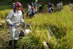 【夢米棚田プロジェクト】棚田の稲刈りを行いました